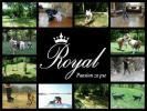 Pansion za pse ROYAL - Beograd